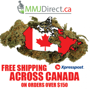 MMJDirect.ca is your online Mail Order Marijuana Delivery service. Register and Order from MMJDirect.ca today!