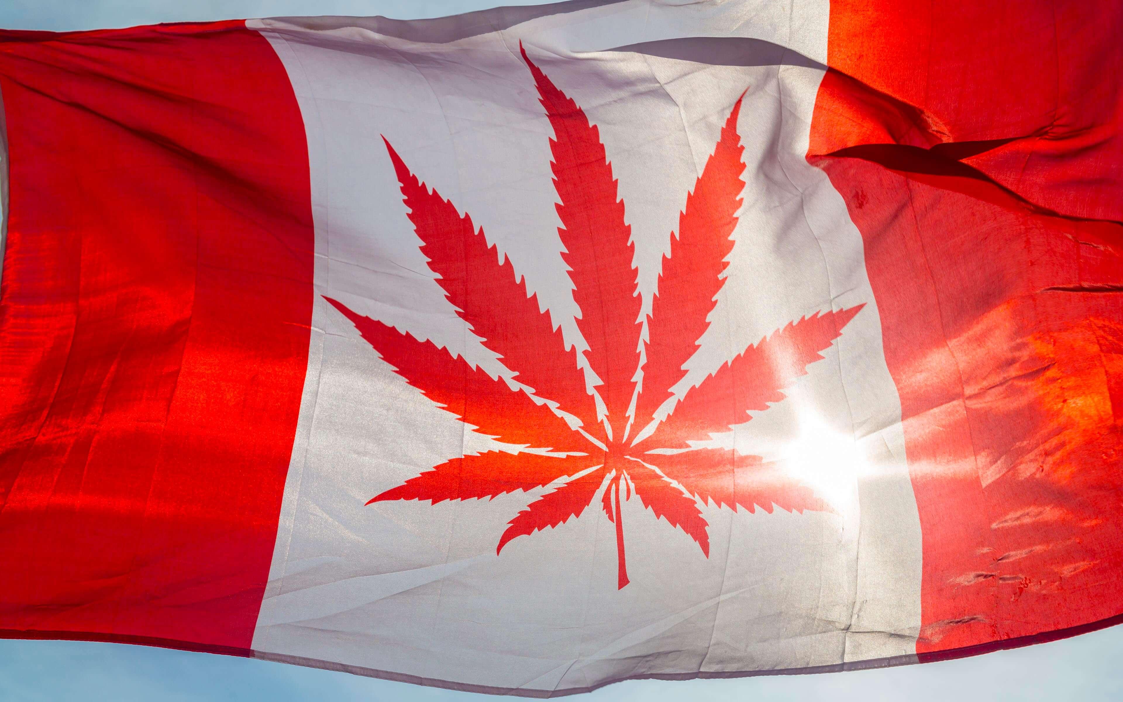 Canada-Weed-1.jpg