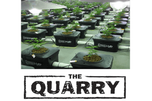 High quality Cannabis from The Quarry