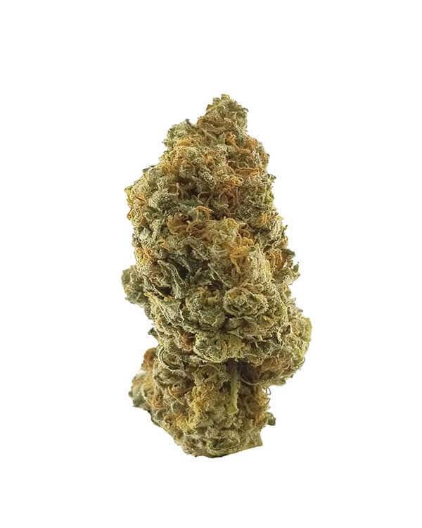 Rose Kush Hybrid Cannabis strain
