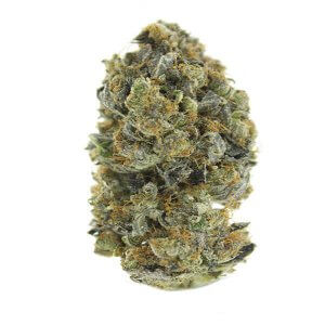 MK Ultra Cannabis bud