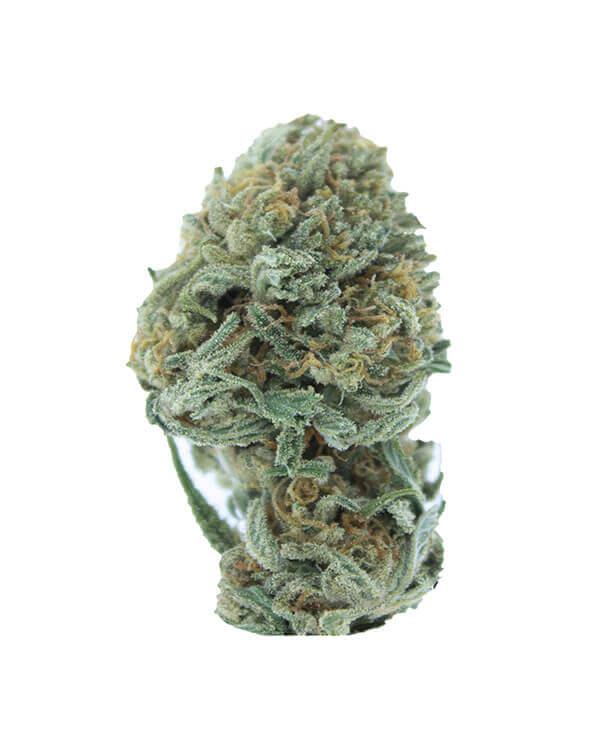 Seawarp Cannabis Strain
