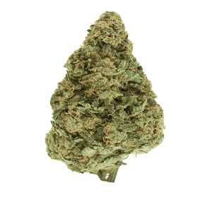 Dutch Treat Cannabis bud