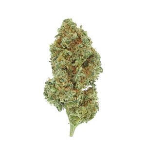Space Queen - Sativa dominant hybrid