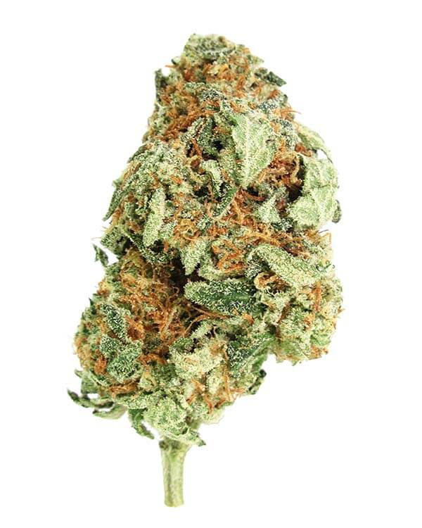 Girl Scout Cookies - 60% Indica Hybrid