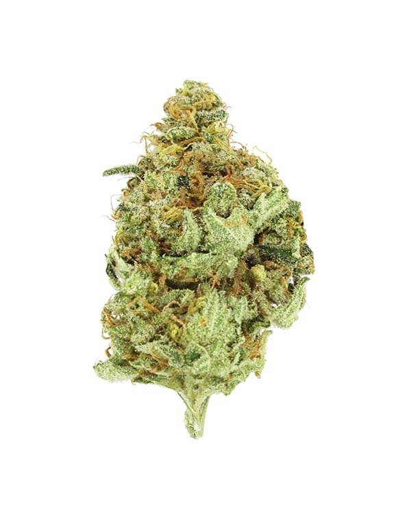Moby Dick - Sativa