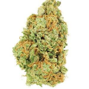 Mimosa - Sativa
