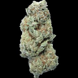 Violator kush cannabis bud