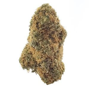 Dried marijuana bud CBD Sunkiss strain