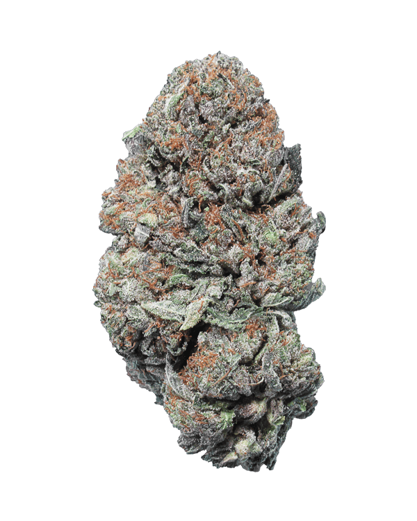 El Jefe strain of Cannabis