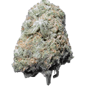 Bay 11 sativa dominant hybrid strain