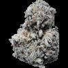 White Russian Hybrid strain