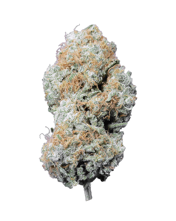 Cookie Dough Haze is a sativa dominant hybrid