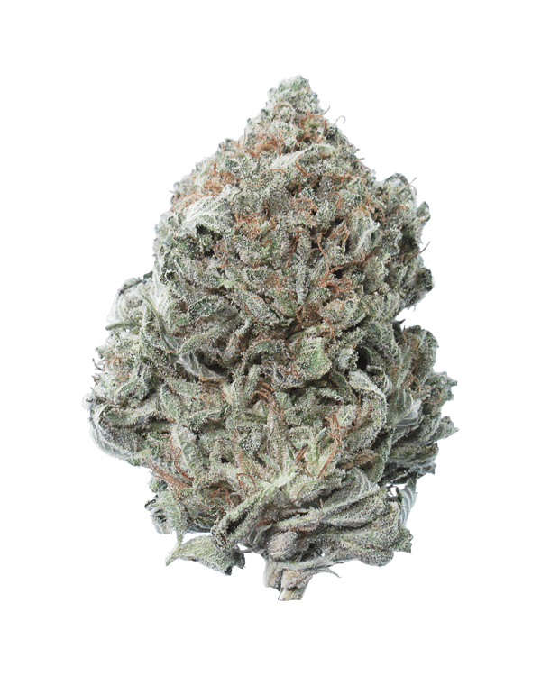 Comotose OG is an 80% indica dominant strain