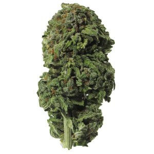 Blueberry Indica dominant hybrid cannabis strain
