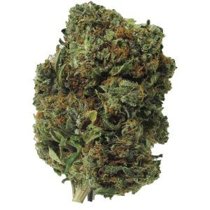 Purple Kush indica cannabis strain