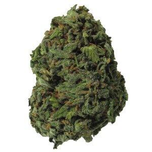 Texada Timewarp sativa dominant hybrid cannabis strain