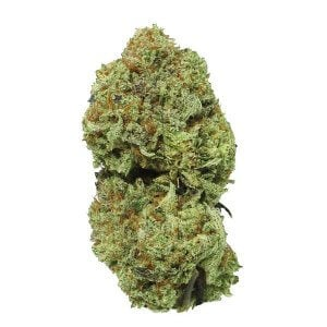 White Widow Sativa