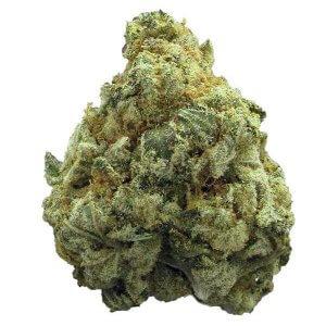 Tropicanna Cookies sativa dominant hybrid strain