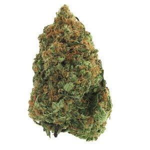 Grape Stomper sativa Dominant Hybrid Cannabis Strain