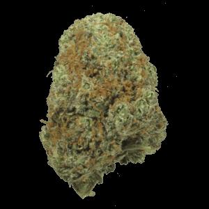 God Bud Hybrid cannabis strain