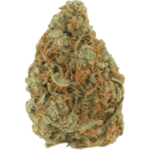 UK Cheese 60% indica dominant cannabis strain