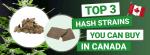 Top 3 Hash in Canada