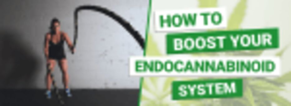 How to Boost Your Endocannabinoid System