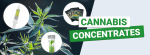 What are Cannabis Concentrates
