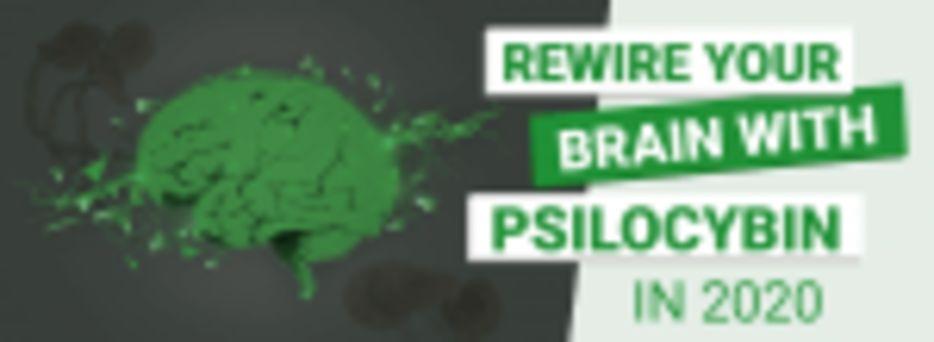 Psilocybin Effects on the Brain