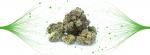 Cannabis and Endocannabinoid System