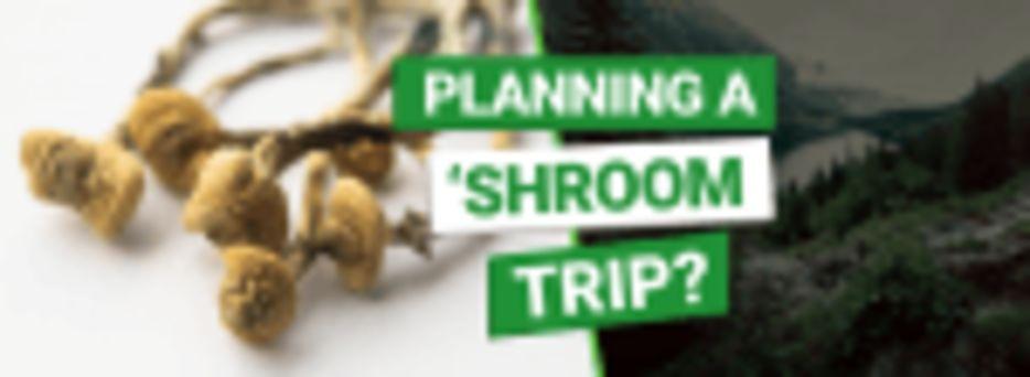 Planning a Shroom Trip