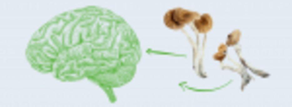 Magic Mushrooms and Brain Fog