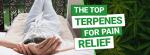 Best Terpenes for Pain Relief