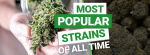 Most Popular Cannabis Strains