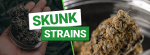 What are Skunk Strains