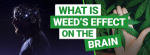 Weed's Effect on the Brain