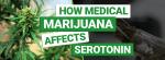 Weed And Serotonin