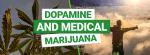 Dopamine and Marijuana