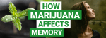 How Marijuana Affects Memory