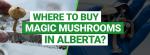 Buy magic Mushrooms in Alberta