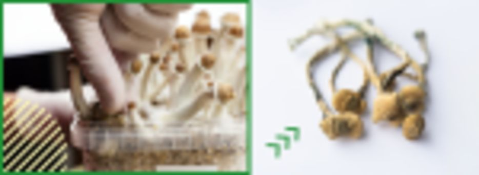 Origins of Shrooms