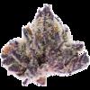 Purple Peyote
