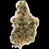 Cactus Breath